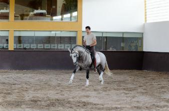 Volteio Equitação